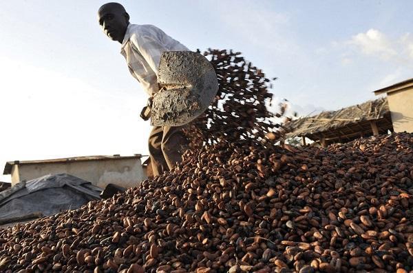 全球熱愛巧克力!可可產量不敷需求 期貨價格上看3210美元 | 鉅亨網 - 農作