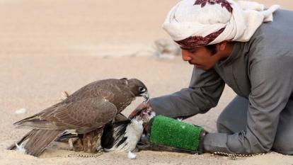 放鷹捕獵是中東富豪常見休閒(圖:AFP)