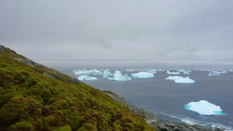 地球暖化導致南極地區苔蘚生長加快。圖片來源:英國艾希特大學研究團隊。