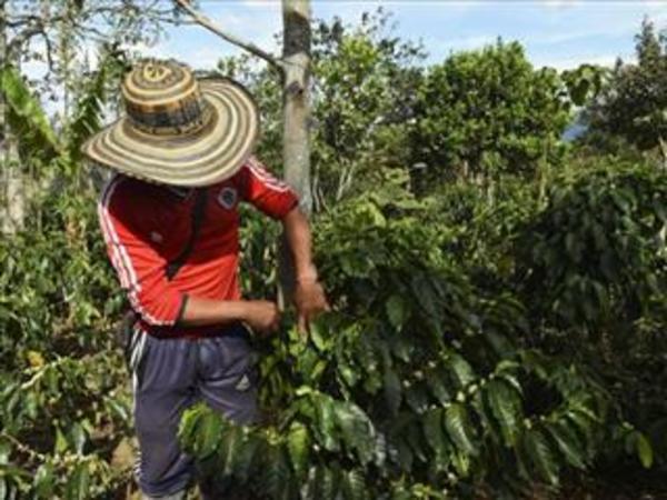 聖嬰現象強度遽增 農產品面臨漲價壓力