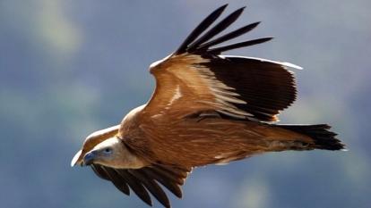 被形容為禿鷹的做空機構盤旋在港股上空。 (圖:AFP)