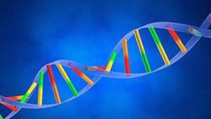 華大基因正式通過上市審查程序,籌集資金17.32億元人民幣。  (圖:維基百科)