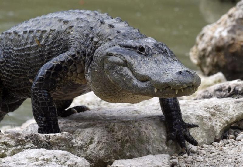 兩棲動物數量也在下降。  (圖:AFP)