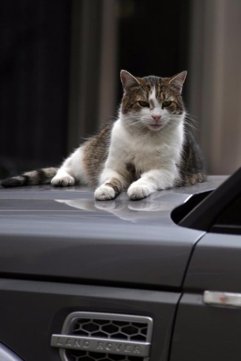 「共享貓咪」和共享出行一樣,打開App介面就能看到附近的貓,掃碼就能抱走。 (圖:AFP)