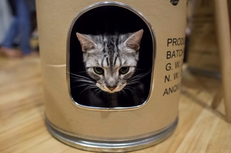 「懶貓奴」每個月只要支付最低99元人民幣,就可以共享貓咪了。  (圖:AFP)