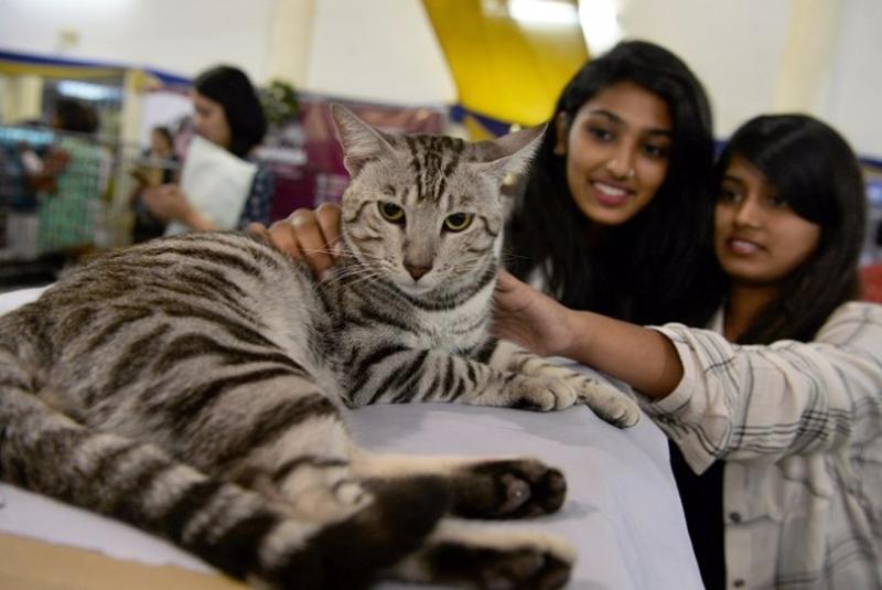 如果想獲得「更優質的品種,更貼心的陪伴」的主題貓,每個月需要388元人民幣。  (圖:AFP)