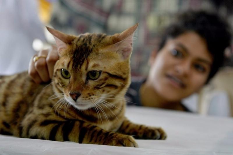「共享貓咪」的用戶群體是針對不想對養貓投入太多精力或擔心貓咪成長中有太多麻煩的人。 (圖:AFP)