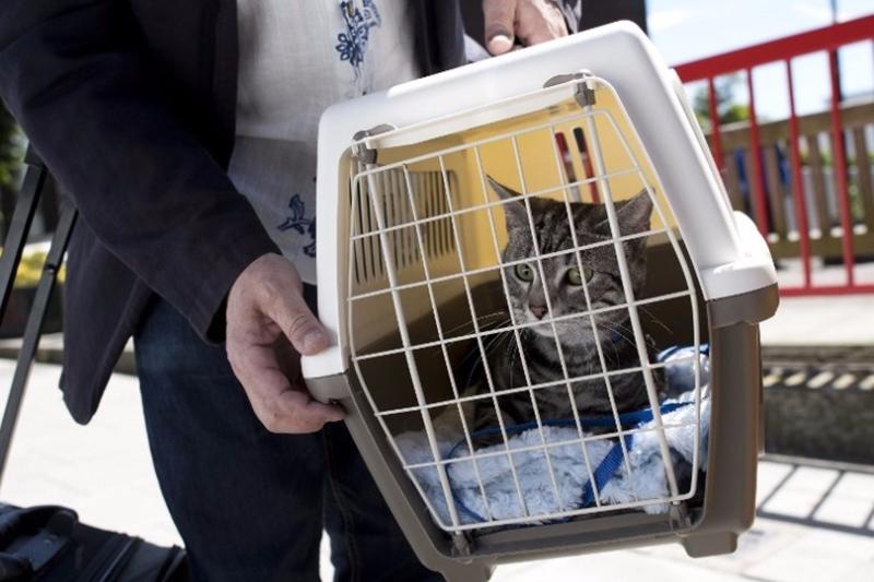 「共享貓咪」會將由「國內最大最專業的寵物領養機構」直接供應。  (圖:AFP)