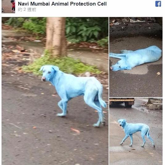 印度動保團體臉書