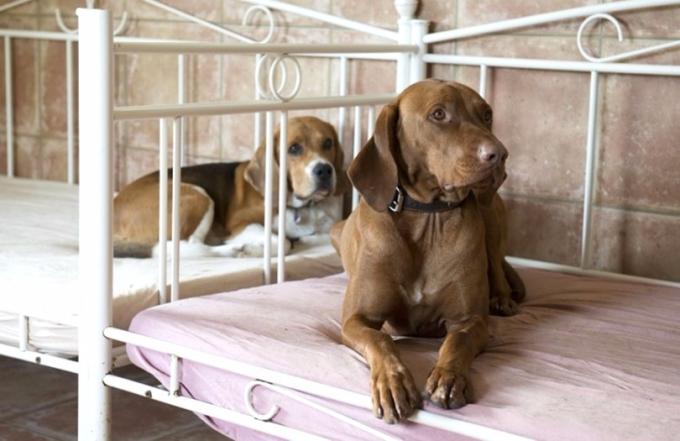 寵物犬有自己的床。 (圖:AFP)