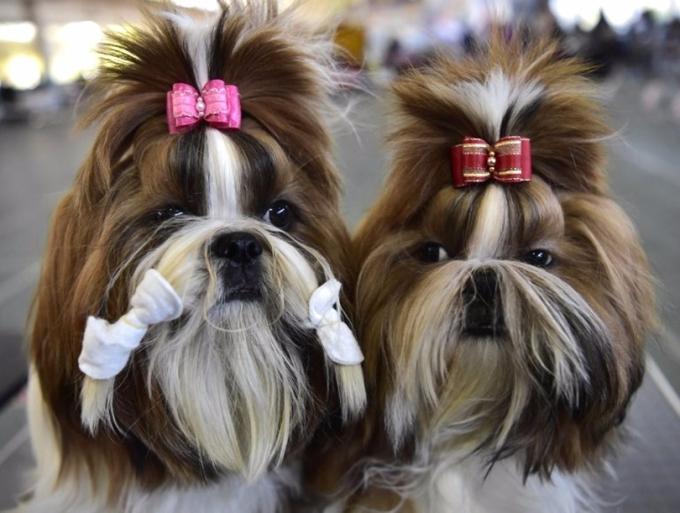 美容的寵物狗。 (圖:AFP)