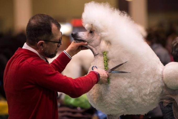 為寵物美容的花費不菲。 (圖:AFP)