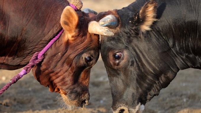 種種跡象顯示,目前A股結構性牛市特徵明顯。 (圖:AFP)