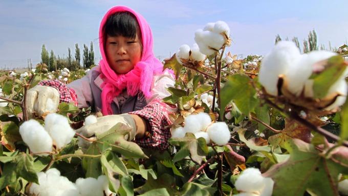 中國的棉花田。(圖:AFP)