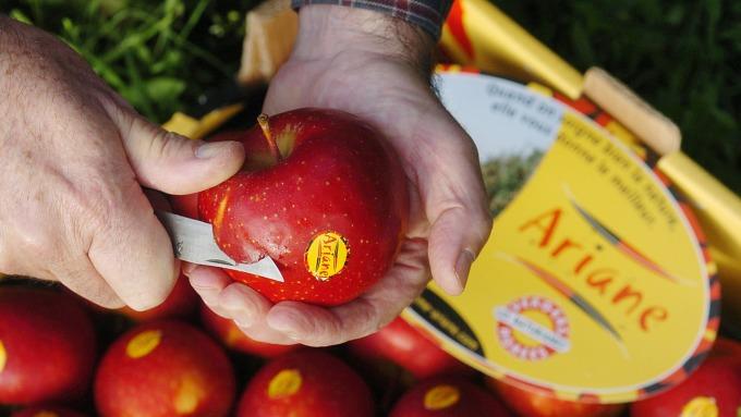 全球首個蘋果期貨即將在大陸鄭州商品交易所(鄭商所)22日掛牌交易。(圖:AFP)