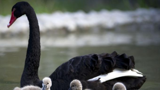 花旗發布2018年油市黑天鵝預測。(圖:AFP)