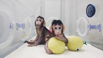 真實版的西遊記  中國科學家成功複製了兩隻猴子