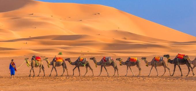 每日傍晚在沙漠入口處會看到一隊隊駱駝,準備載旅客進入沙漠中的營區。