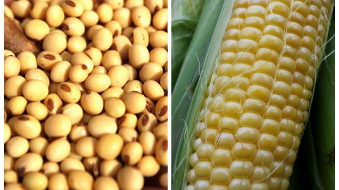 阿根廷是全球第3大粟米(玉米)和大豆出口國,大旱農作物失收導致全球穀物價格上升。 (圖:AFP)