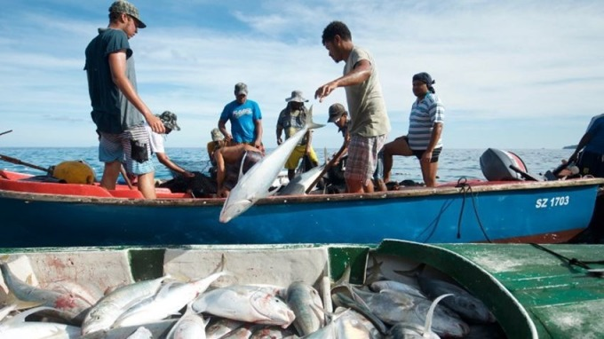 如果全球變暖的趨勢無法得到緩解,到2300年,全球漁獲量將下降2成。 (圖:AFP)