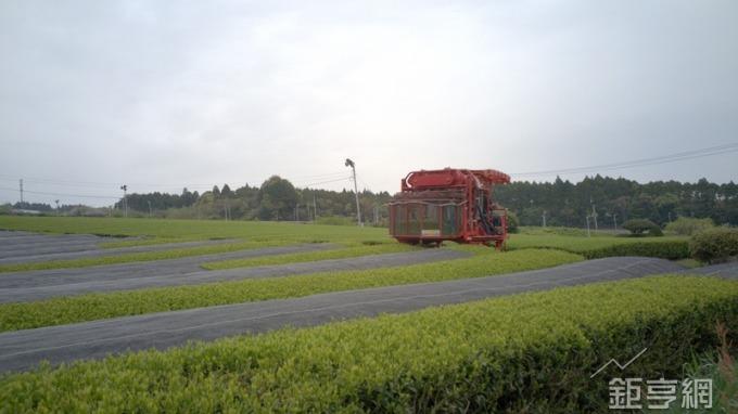 日本玉露茶經20天以上的覆蓋栽種,減少日照帶來的苦澀味。(鉅亨網記者張欽發攝)
