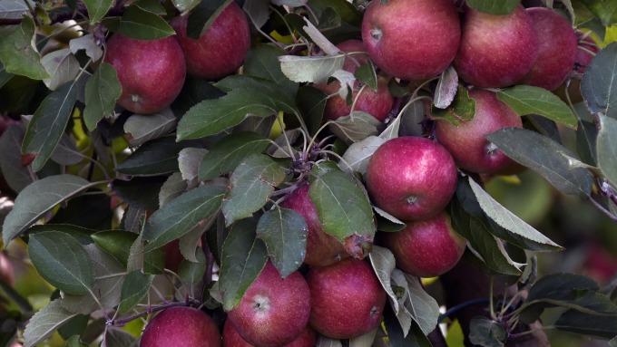 蘋果(圖:AFP)