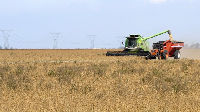 全球黃豆貿易格局或生變。(圖:AFP)