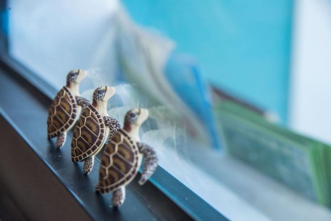 愛護海洋與海龜們一起快樂的生活