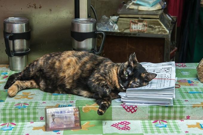 店長瞇一下 住市場的老貓「醜女」習慣人來人往,一臉淡定。
