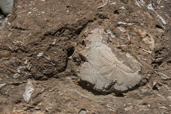 一條條長短不一的生痕化石足跡遍佈腳邊的岩石