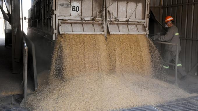 中國黃豆主產區霜凍,黃豆期貨大漲(圖:AFP)