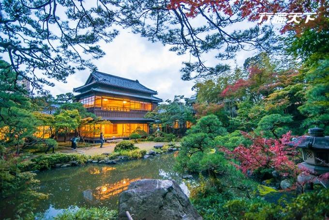 舊齋藤家別邸「庭屋一如」可由屋內眺望庭園秋日楓葉美景。