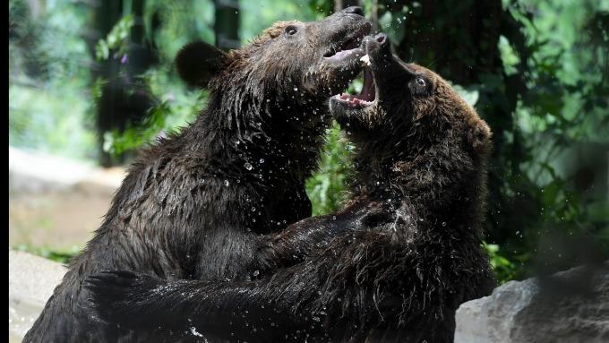那斯達克與羅素2000皆已邁入熊市。(圖:AFP)