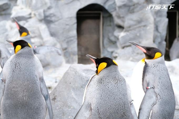 令人期待的季節限定企鵝遊行。