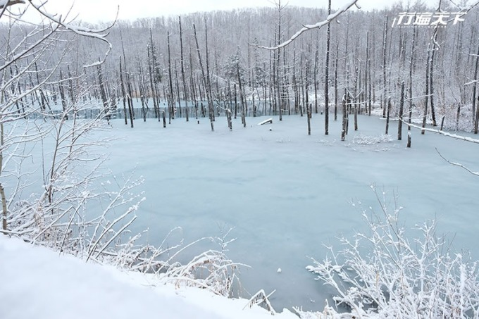 青池湖面反射出清澈的藍。