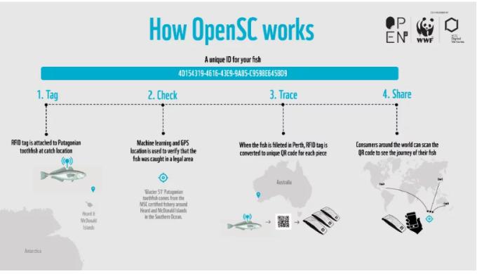 OpenSC 進行野生魚類追蹤範例 (圖: cointelegraph)