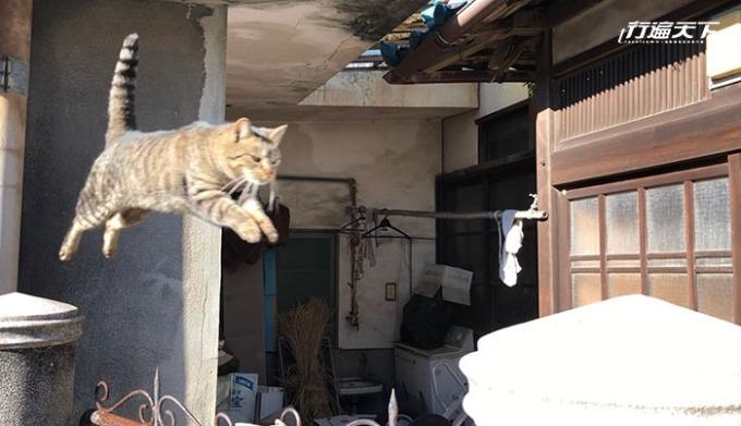 遇到了正在餵養貓咪的島民,用一顆顆貓飼料引誘著小貓來回跳躍著。