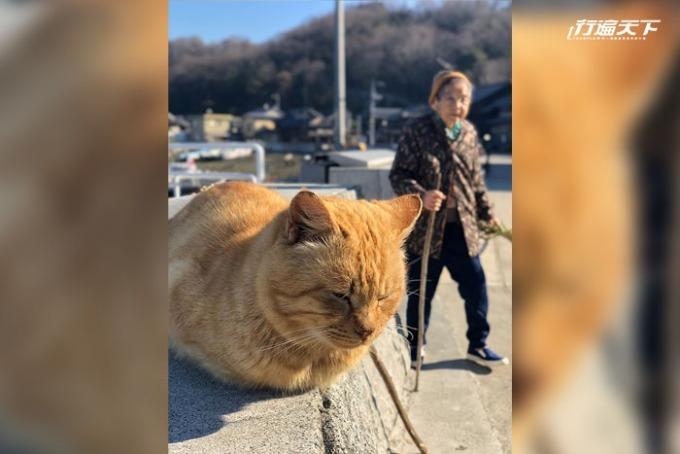 100 多隻貓咪與島民一起閒逸地生活在此方。