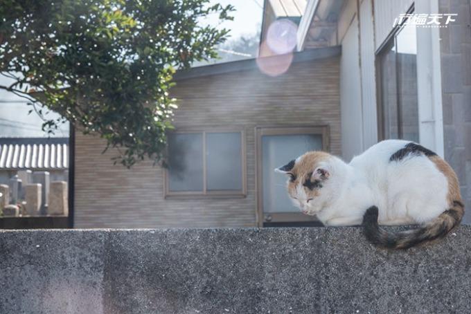 散步在島上要仔細查看,剛走過的圍牆上,可能就會有「貓島民」在打盹。