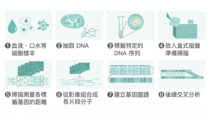 全基因體圖譜繪製流程。 資料來源│Vilella Genomics 圖片重製│張語辰
