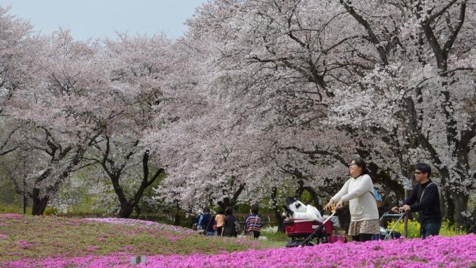 3月訪日外國遊客創新高,在日消費金額增加 (圖:AFP)