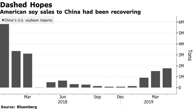 中國自美進口之黃豆規模 圖片來源:Bloomberg