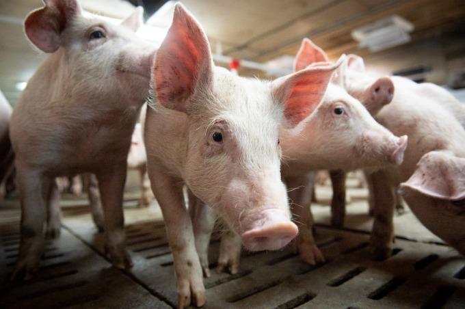 中國以假造證書為由禁止進口加拿大肉類 (圖片: AFP)