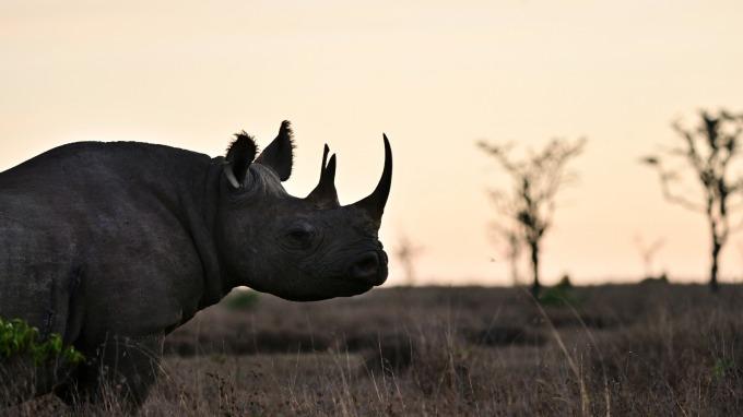 支持野生保育 你可以選擇購買「犀牛債券」(圖:AFP)