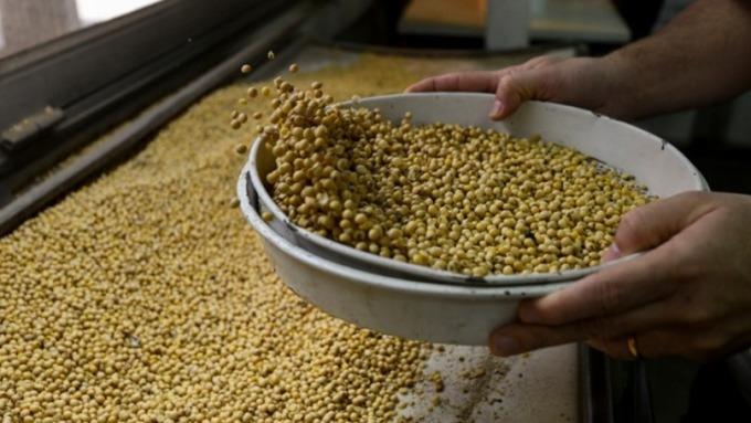 傳中國已允許5家公司自美國進口大豆以展示善意 (圖片:AFP)