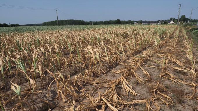 農業科技公司預測:美玉米、大豆產量恐將銳減 (圖片:AFP)
