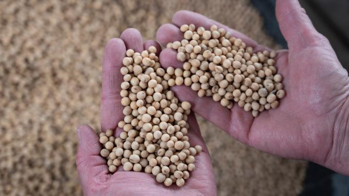 美農業部指出中國購買大豆數量僅達承諾的一半(圖片:AFP)