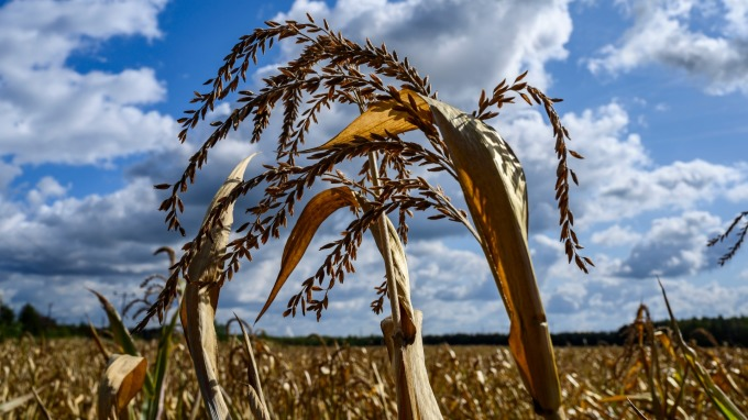 台灣出手「上百億」 購買 180 萬噸美國小麥。(圖片:AFP)
