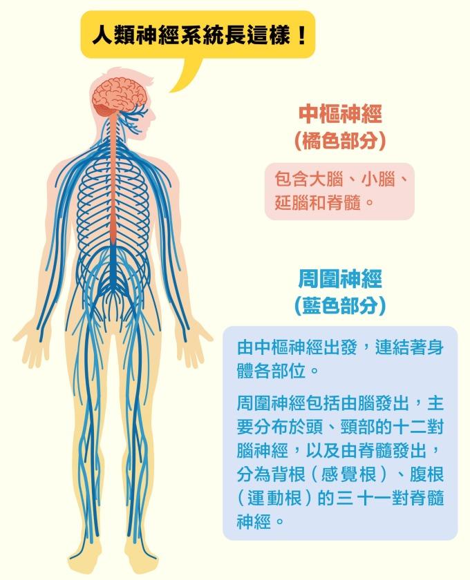 圖片來源│iStock 圖說設計│黃曉君、林洵安