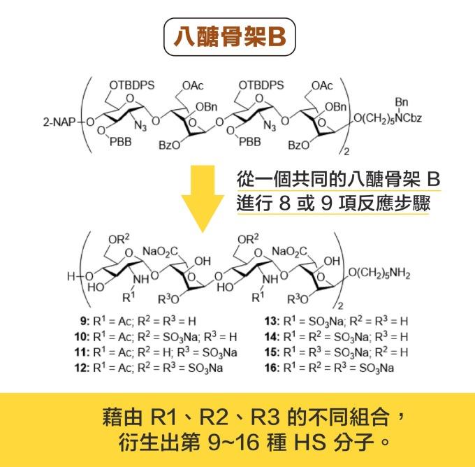 從一個共同的八醣骨架 B ,分別進行 8 或 9 項反應步驟,可以衍生出 8 種 HS 分子。 資料來源|洪上程 圖說設計|黃曉君、林洵安